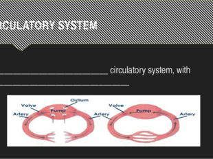 CIRCULATORY SYSTEM ___________________________ circulatory system, with _____