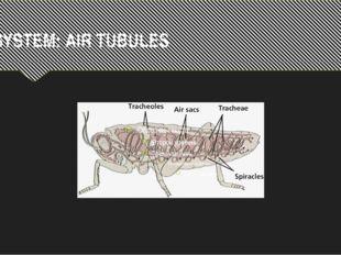 R.SYSTEM: AIR TUBULES