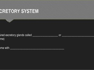 EXCRETORY SYSTEM Paired excretory glands called __________________ or _______
