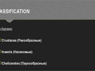CLASSIFICATION 3 classes: Crustacea (Ракообразные) Insects (Насекомые) Chelic