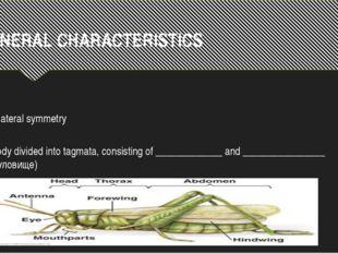 GENERAL CHARACTERISTICS Bilateral symmetry Body divided into tagmata, consist