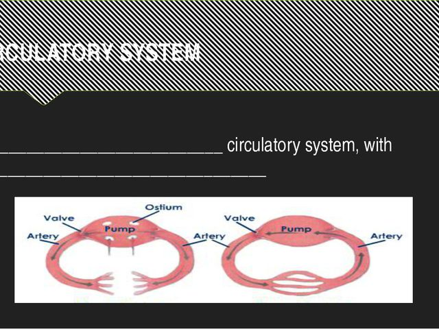 CIRCULATORY SYSTEM ___________________________ circulatory system, with _____...
