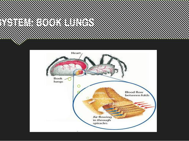 R.SYSTEM: BOOK LUNGS