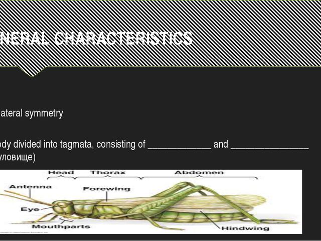 GENERAL CHARACTERISTICS Bilateral symmetry Body divided into tagmata, consist...