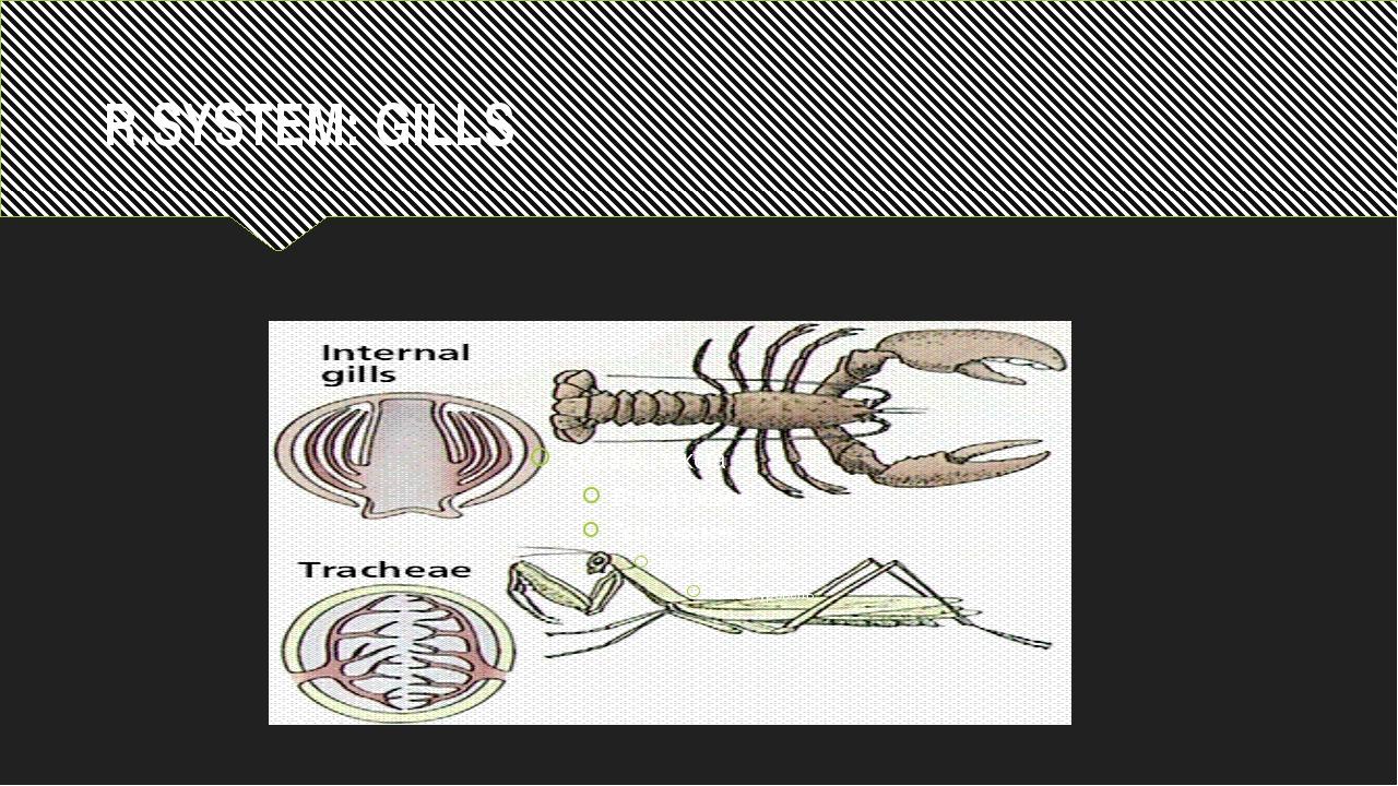 R.SYSTEM: GILLS