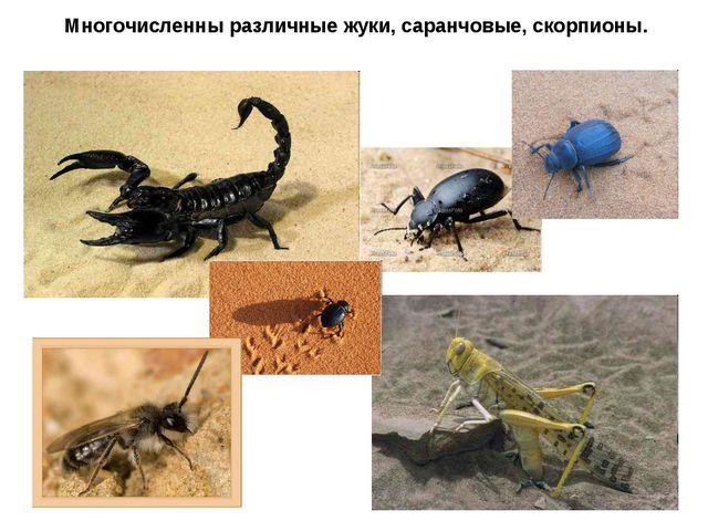 Многочисленны различные жуки, саранчовые, скорпионы.