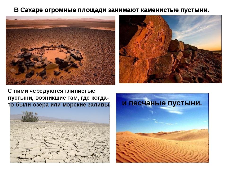 В Сахаре огромные площади занимают каменистые пустыни. С ними чередуются глин...
