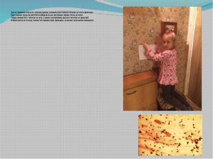 Для исследования повесила листочки бумаги, смазанные вазелином в спальню, в з