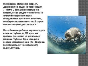 В спокойной обстановке скорость движения под водой не превосходит 7−8 км/ч.