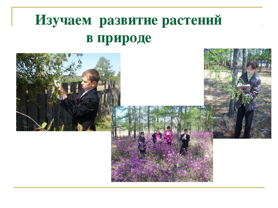 Изучаем развитие растений в природе