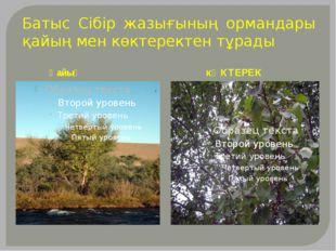 Батыс Сібір жазығының ормандары қайың мен көктеректен тұрады Қайың кӨКТЕРЕК