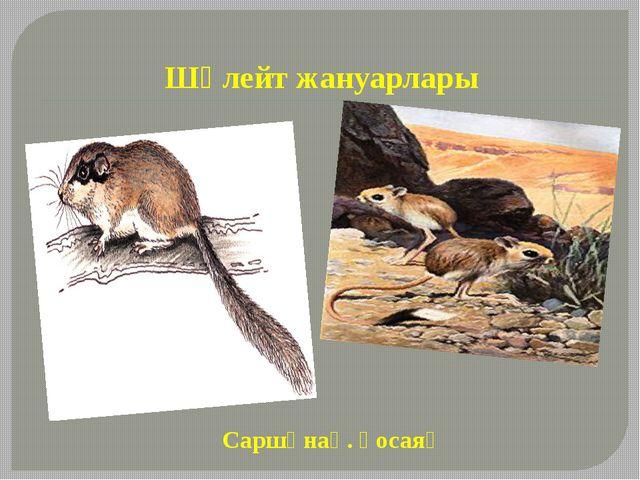 Шөлейт жануарлары Саршұнақ. қосаяқ