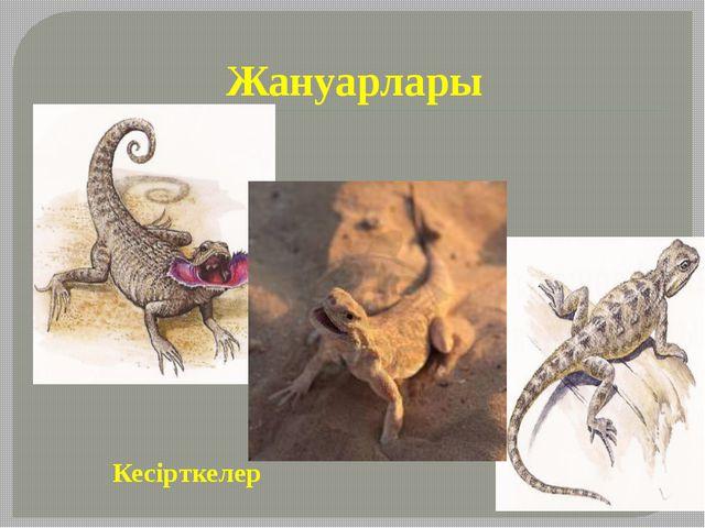 Жануарлары Кесірткелер