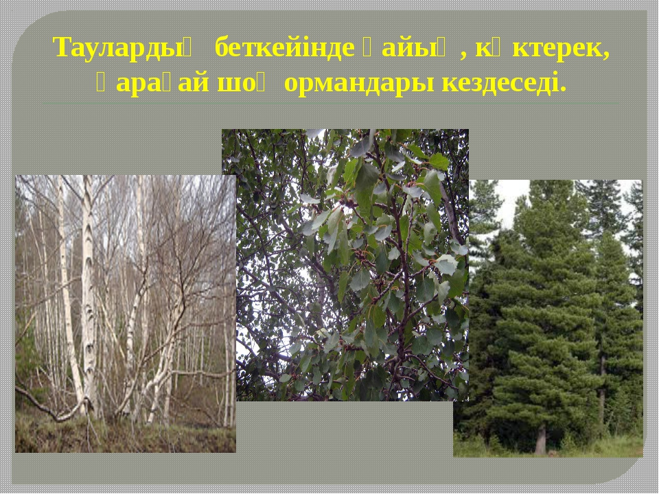 Таулардың беткейінде қайың, көктерек, қарағай шоқ ормандары кездеседі.