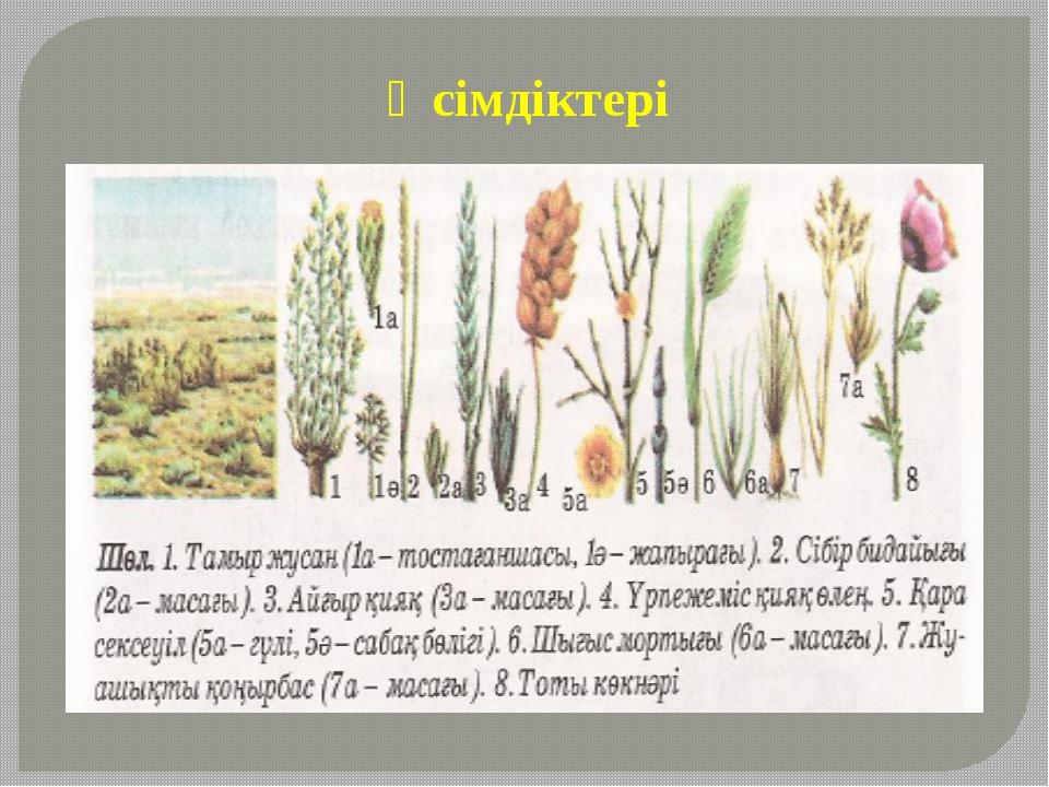 Өсімдіктері