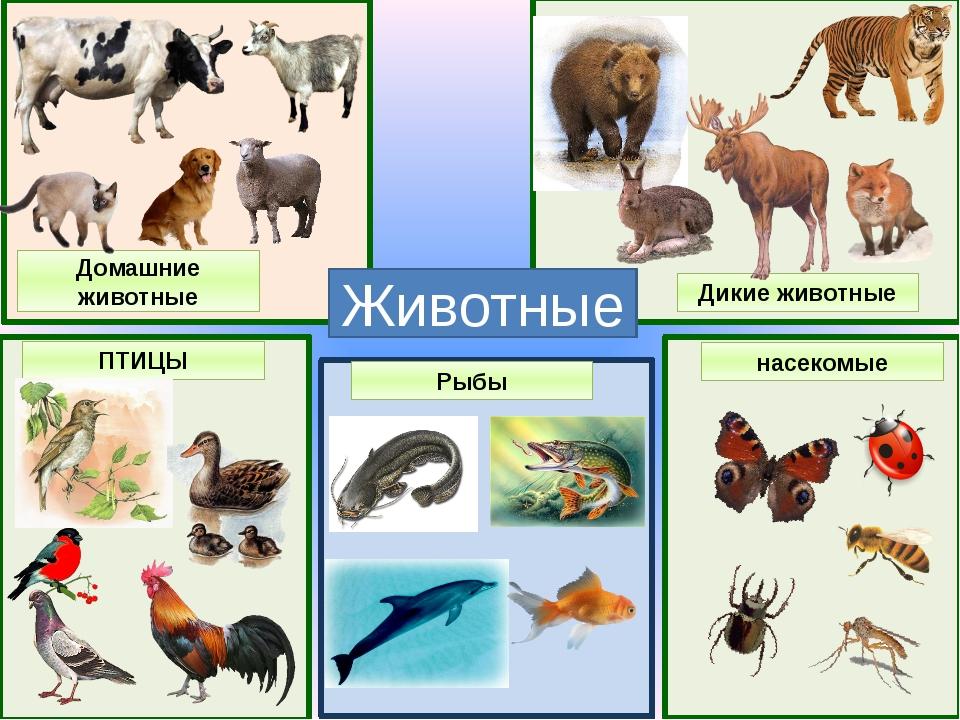 название групп животных с картинками ним другими детьми