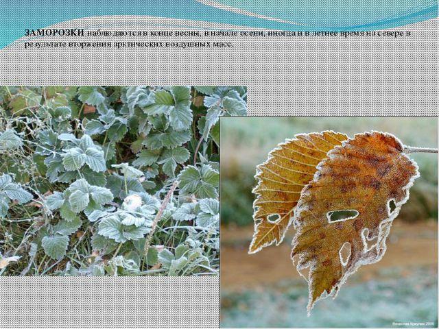 ЗАМОРОЗКИ наблюдаются в конце весны, в начале осени, иногда и в летнее время...