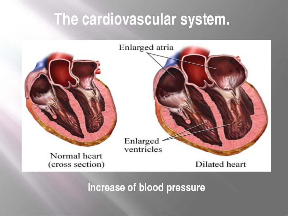 The cardiovascular system. Increase of blood pressure
