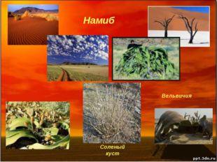 Намиб Вельвичия Соленый куст