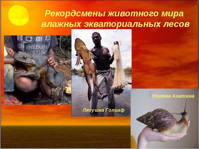 Рекордсмены животного мира влажных экваториальных лесов Лягушка Голиаф Улитка...