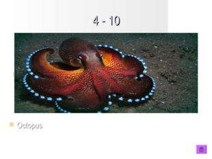 4 - 10 Type question to appear here Octopus