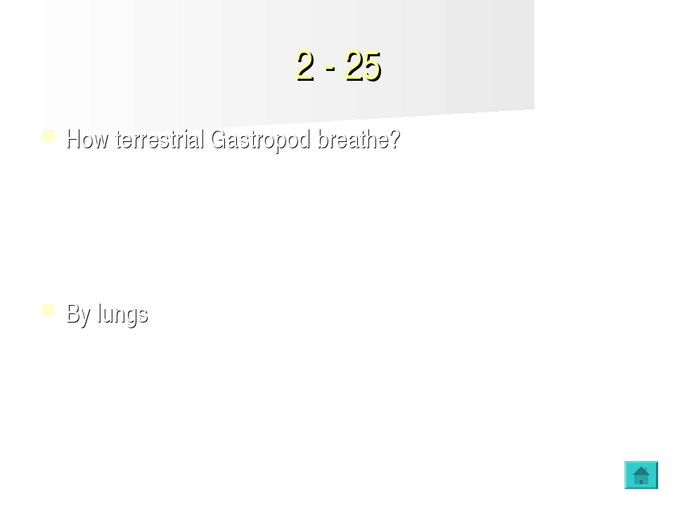 2 - 25 How terrestrial Gastropod breathe? By lungs