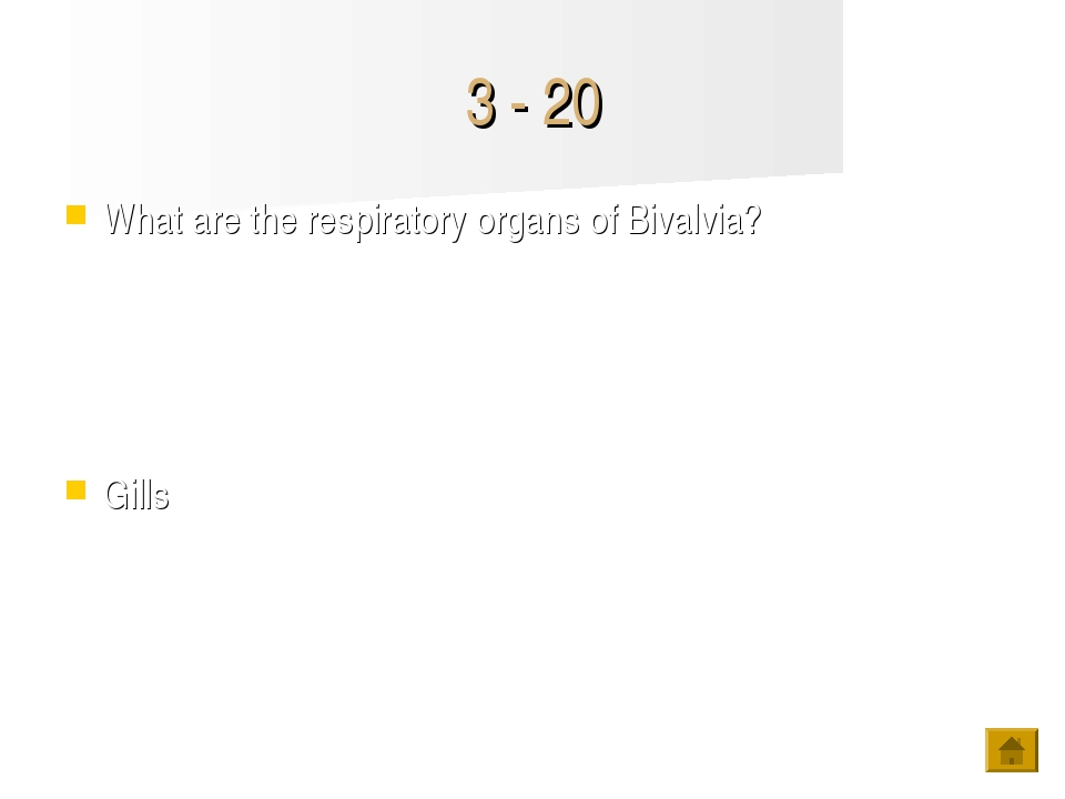 3 - 20 What are the respiratory organs of Bivalvia? Gills