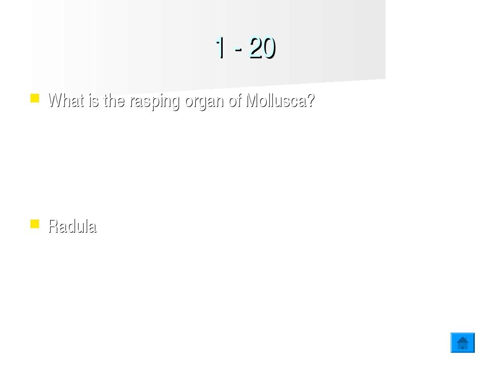 1 - 20 What is the rasping organ of Mollusca? Radula