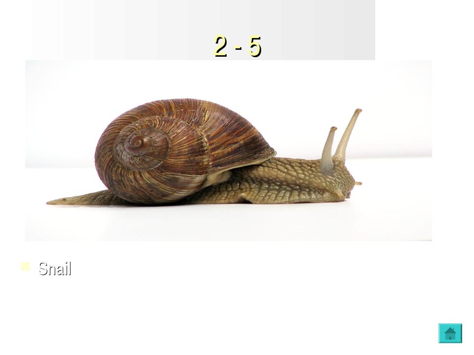 2 - 5 Snail