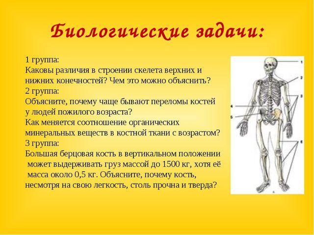 Биологические задачи: 1 группа: Каковы различия в строении скелета верхних и...