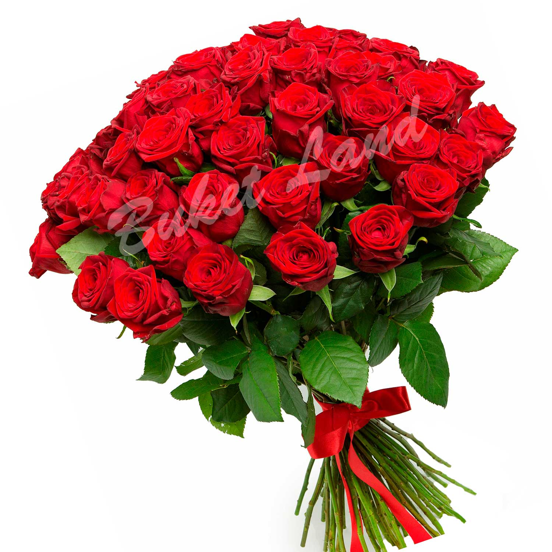 http://buketland.com.ua/images/51_red_roses_L.jpg