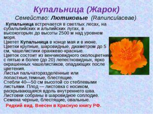 Купальница (Жарок) Семейство:Лютиковые (Ranunculaceae) Купальницавстречае