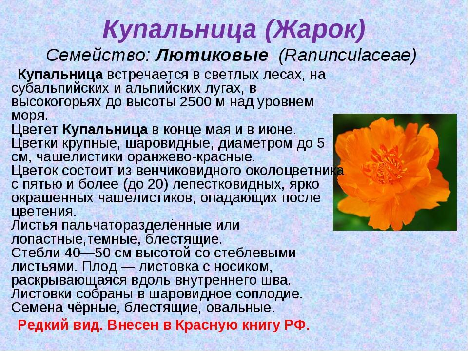 Купальница (Жарок) Семейство:Лютиковые (Ranunculaceae) Купальницавстречае...