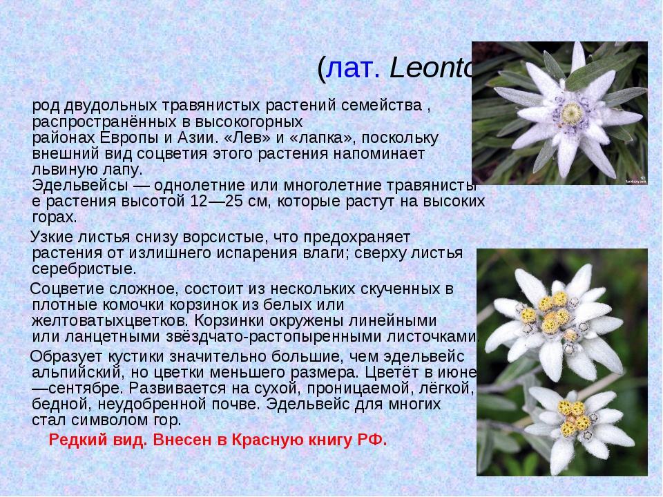Эдельве́йс(лат.Leontopódium) роддвудольныхтравянистых растенийсемейства,...