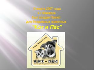 """12 марта 2007 года в г.Ижевске был создан Приют для бездомных животных """"Кот и"""
