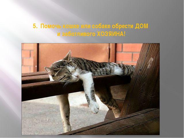 5. Помочь кошке или собаке обрести ДОМ и заботливого ХОЗЯИНА!