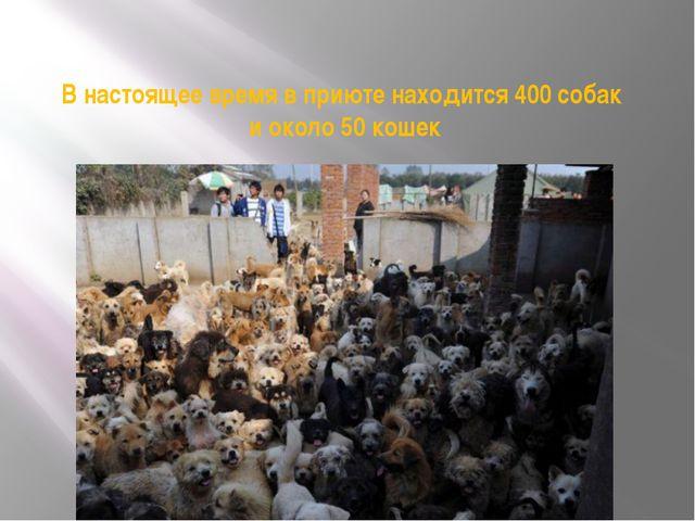В настоящее время в приюте находится 400 собак и около 50 кошек