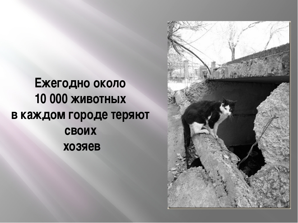 Ежегодно около 10 000 животных в каждом городе теряют своих хозяев