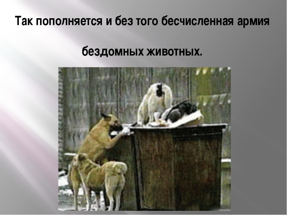 Так пополняется и без того бесчисленная армия бездомных животных.