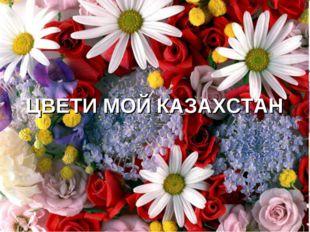 ЦВЕТИ МОЙ КАЗАХСТАН
