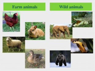 Farm animals Wild animals
