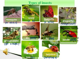 Types of insects mosquito [mαski:təū] wasp [wαsp] Butterfly [bλterflai] drag