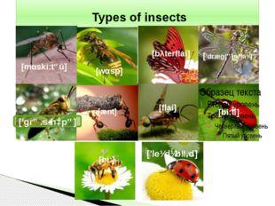 Types of insects [mαski:təū] [wαsp] ['grɑːsˌhɔpə] [bλterflai] ['dræg(ə)nflaɪ