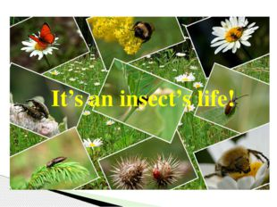 It's an insect's life!