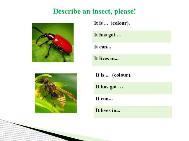 Describe an insect, please! Itis...  (colour). It has got … Itcan... Itlives...