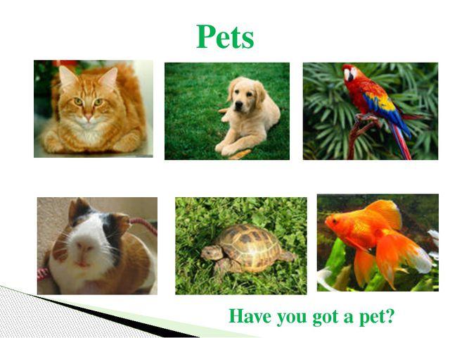 Pets Have you got a pet?