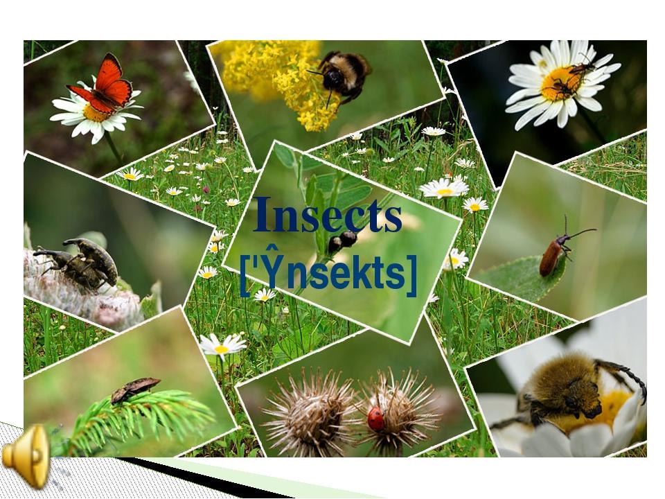 Insects ['ɪnsekts]