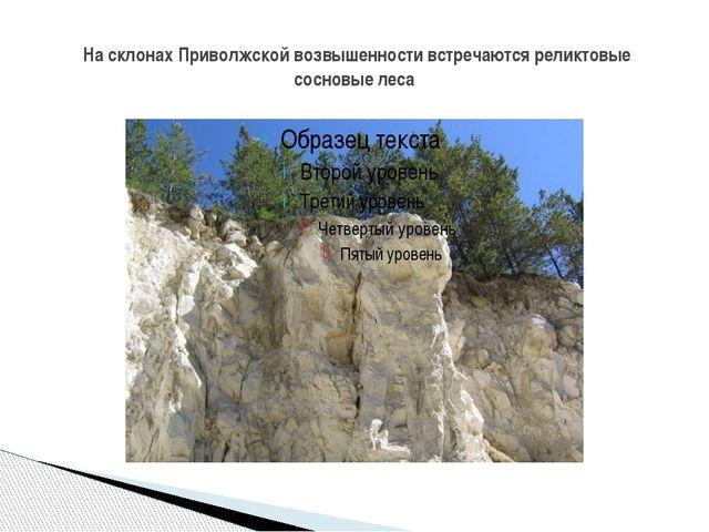На склонах Приволжской возвышенности встречаются реликтовые сосновые леса
