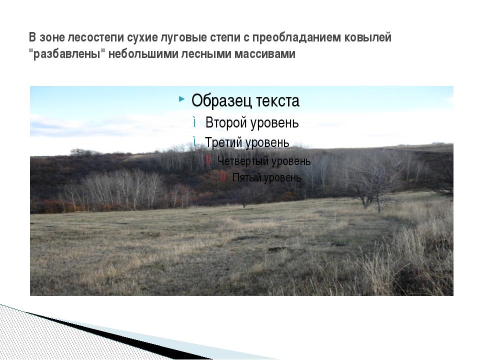 """В зоне лесостепи сухие луговые степи с преобладанием ковылей """"разбавлены"""" неб..."""