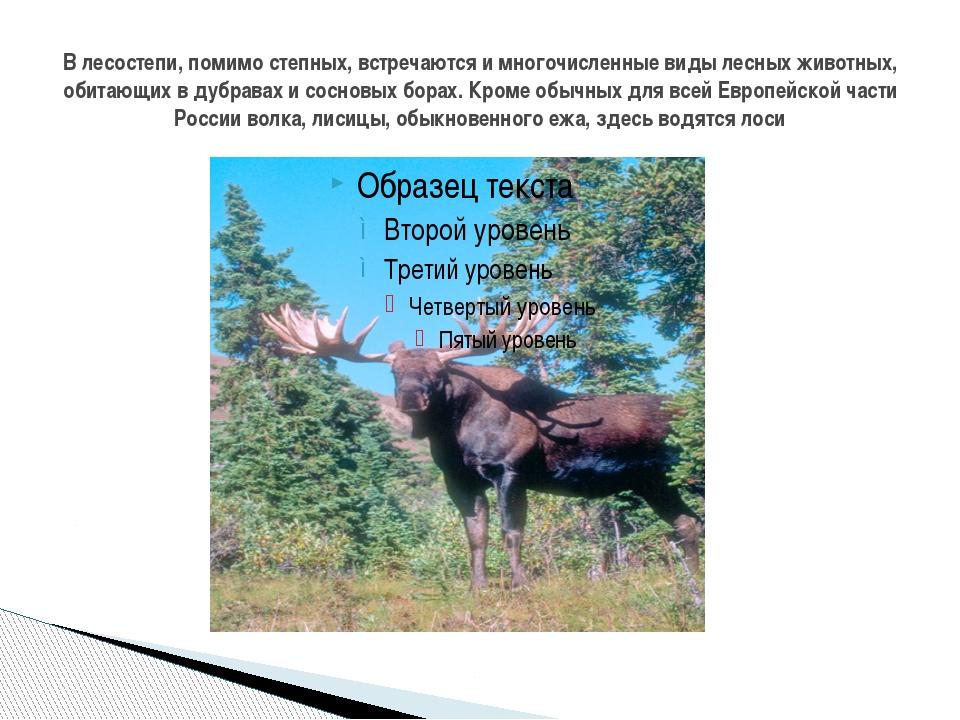 В лесостепи, помимо степных, встречаются и многочисленные виды лесных животны...